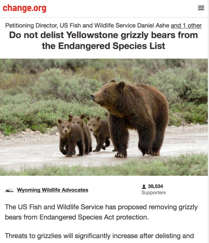 Petitioning Director, US Fish and Wildlife Service Daniel Ashe and 1 other Do not delist Yellowstone grizzly bears from the Endangered Species List