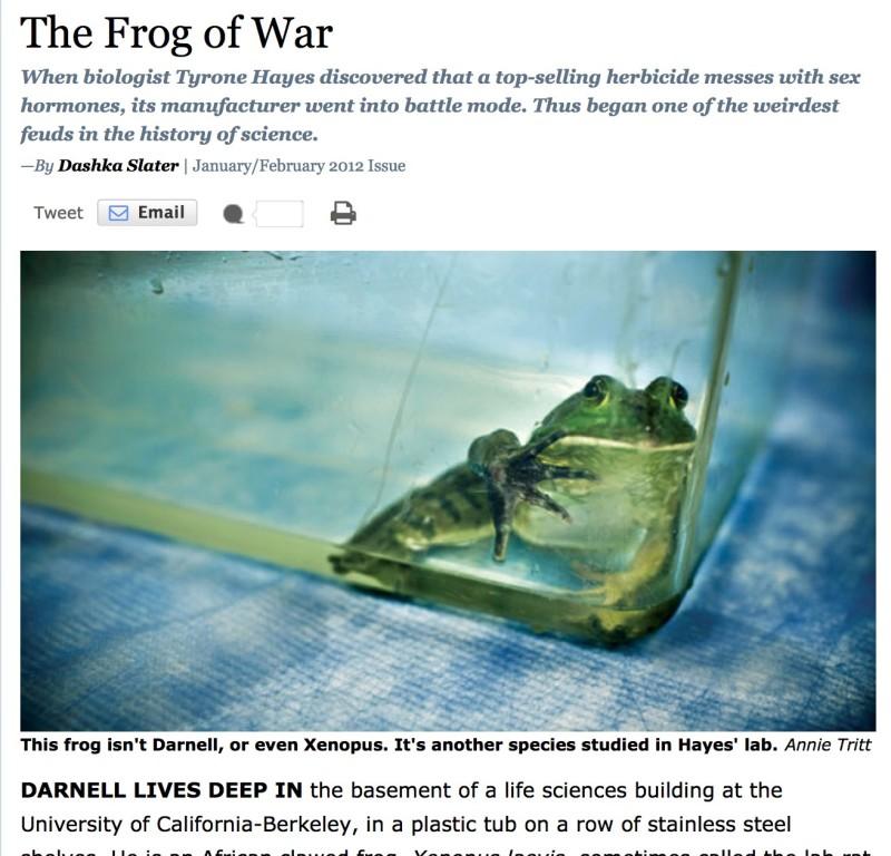frog-of-war